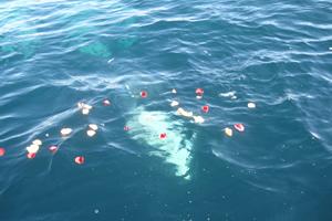ファミリーホール鶴ヶ峰の海洋散骨、海への葬送