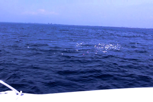 ファミリーホール鶴ヶ峰の海洋散骨、周回してお別れいたします。