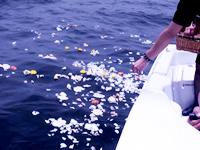 ファミリーホール鶴ヶ峰の海洋散骨風景、献花・献酒