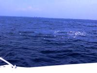 ファミリーホール鶴ヶ峰の海洋散骨、散骨当日の流れ・周航