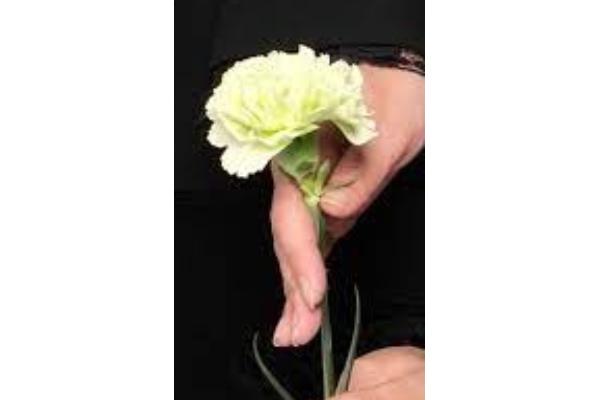 ファミリーホール鶴ヶ峰、骨葬プラン献花 カーネーションのご案内