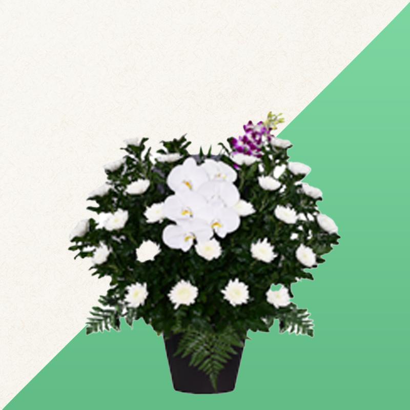 ファミリーホール鶴ヶ峰、供花のご注文・白菊 16,500円